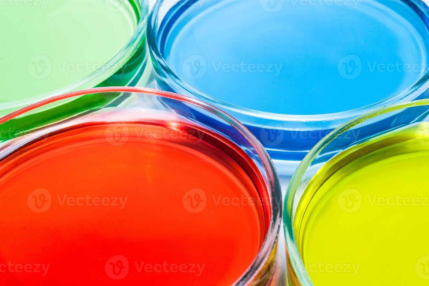 conjunto de placas de Petri con líquido coloreado foto