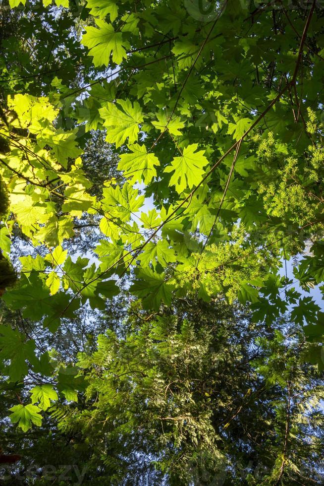 hojas soleadas con luz de fondo foto