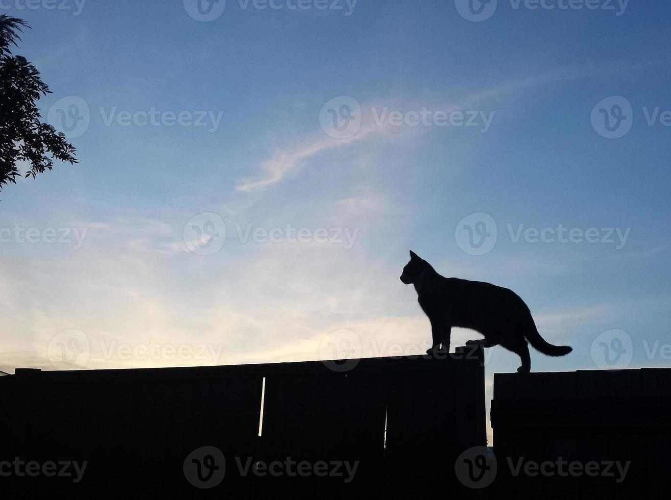 Cat on Fence Silhouette photo