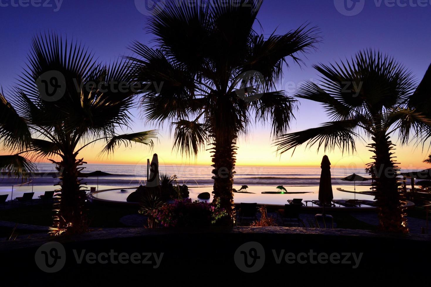 Palm Tree Silhouette with sunset photo