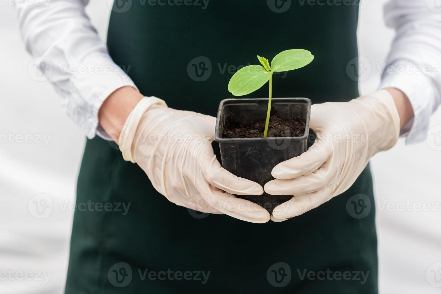 Bio food production. photo