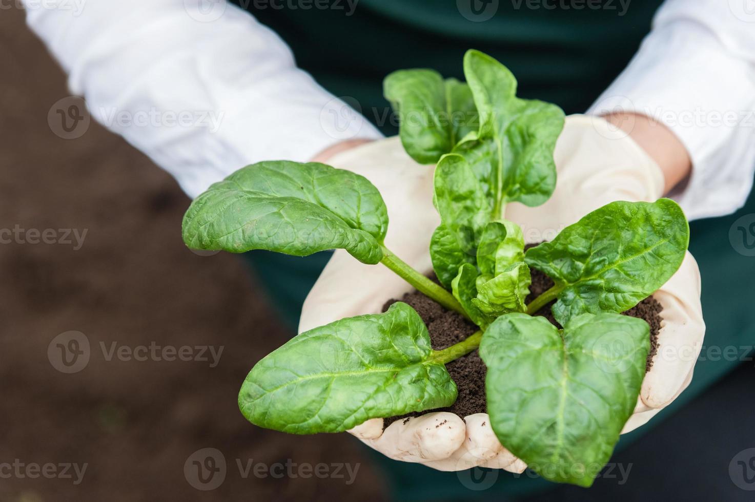 producción de bio alimentos. foto