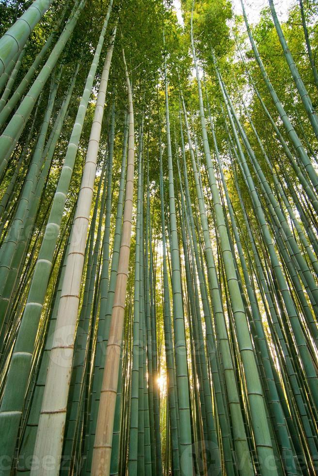 arboleda de bambú foto