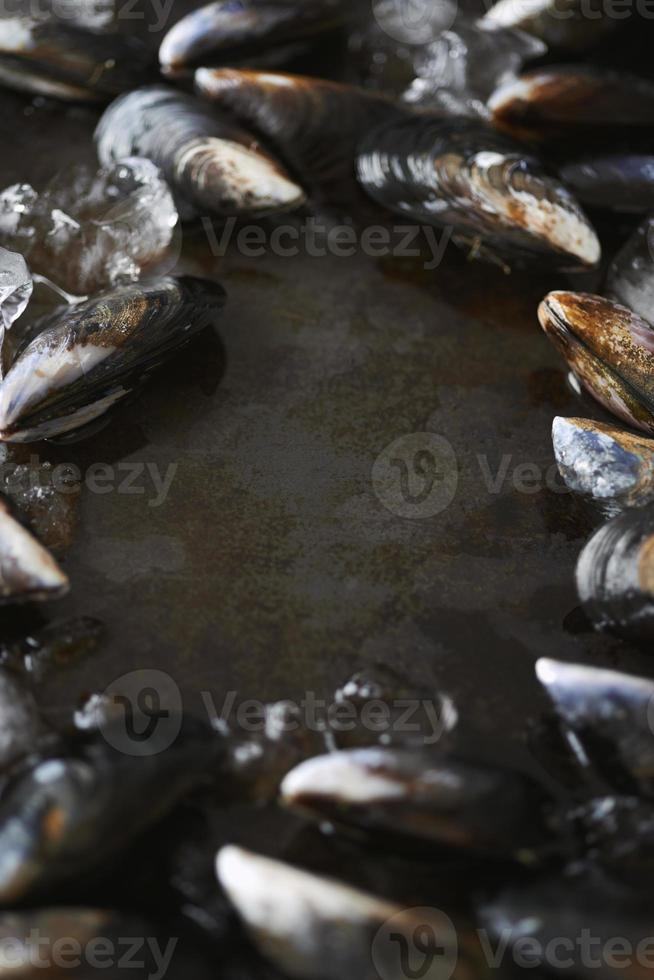 Mussels surrounding dark copy space photo
