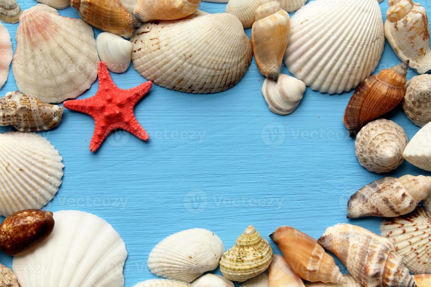 Sea shells and starfish and copy space for text photo