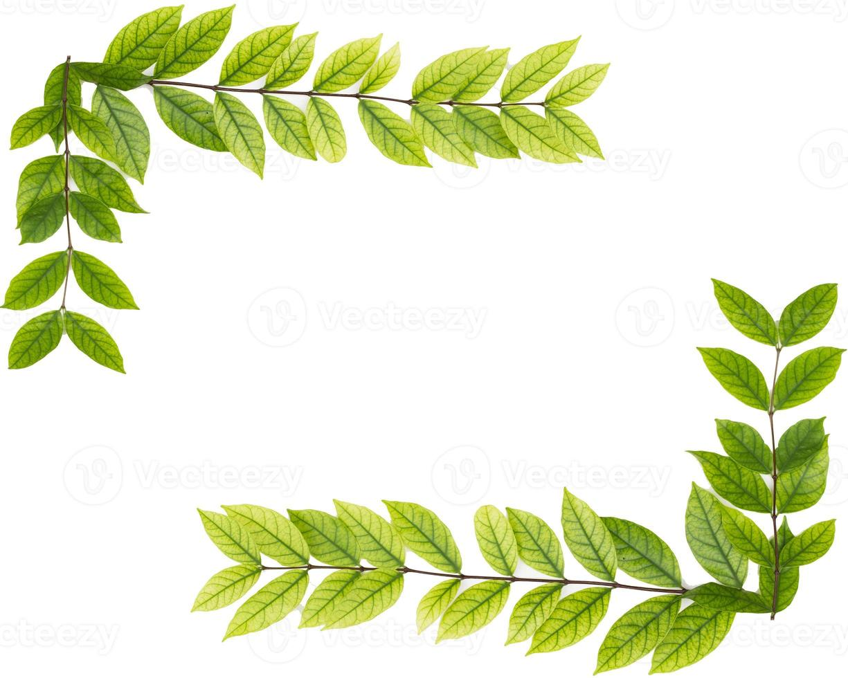 blank copy space of green leaf isolated on white background photo