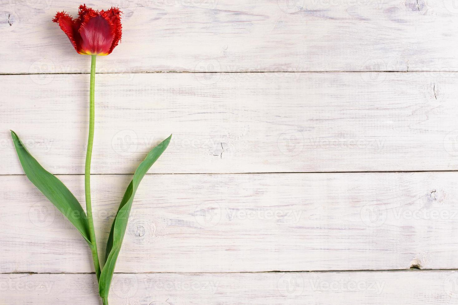 Red tulip flower on wooden background. Top view, copy space photo