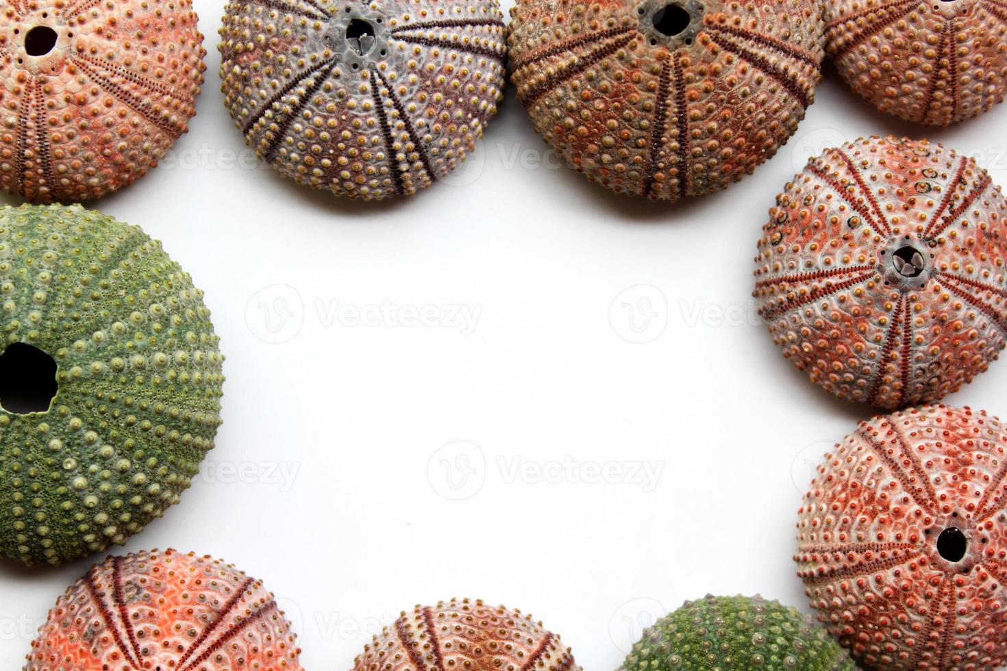 Variety of colorful sea urchins with copy space for text photo