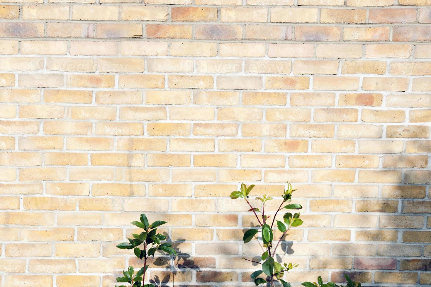 planta en una pared de ladrillos foto