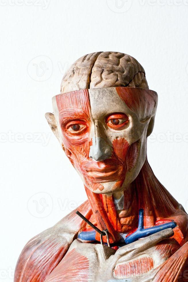 anatomía humana grunge foto