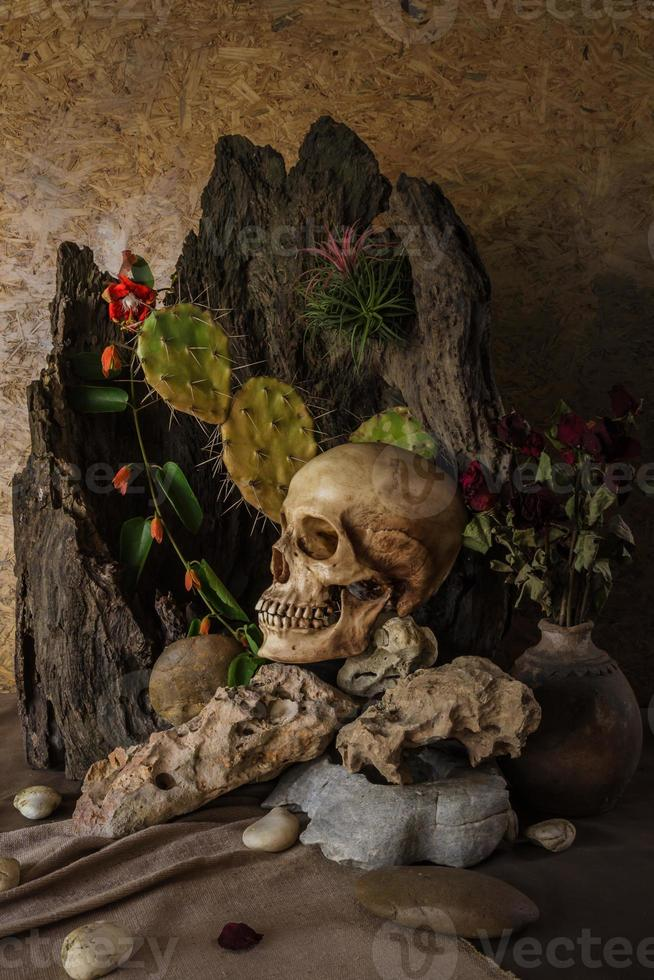 Still life with a human skull with desert plants, cactus, photo