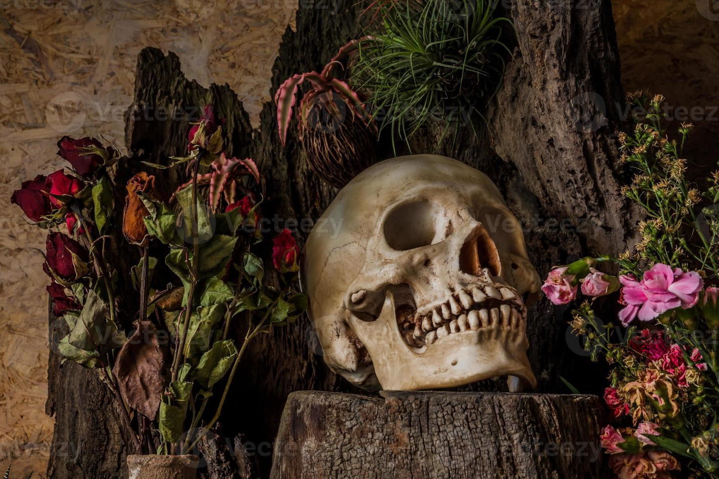 Still life with a human skull with desert plants, cactus photo