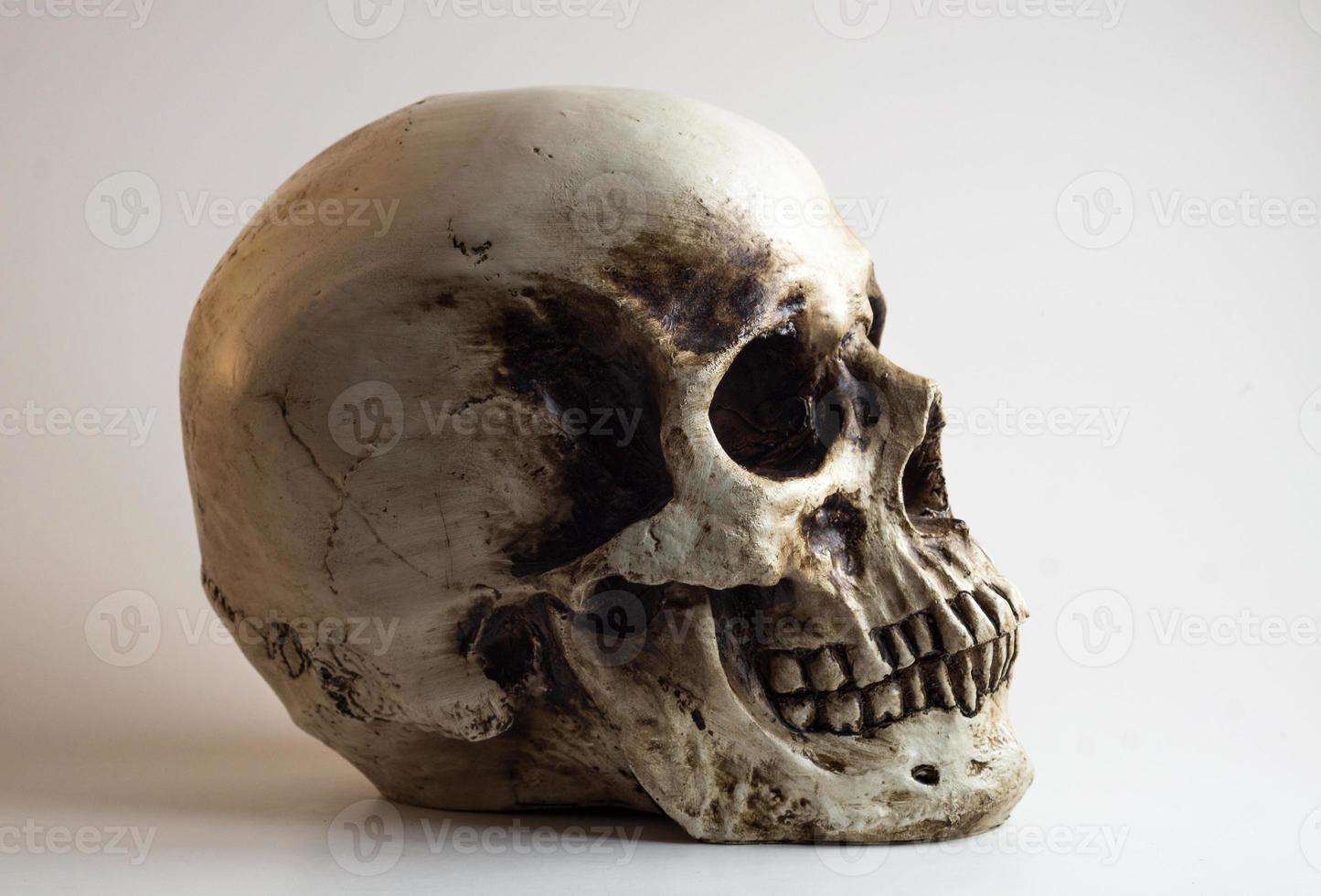 right facing skull shadow light profile photo