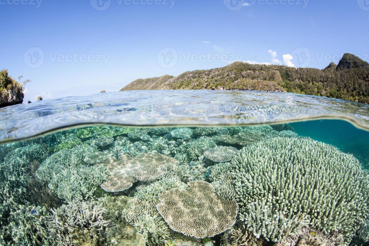 recife raso no triângulo coral foto