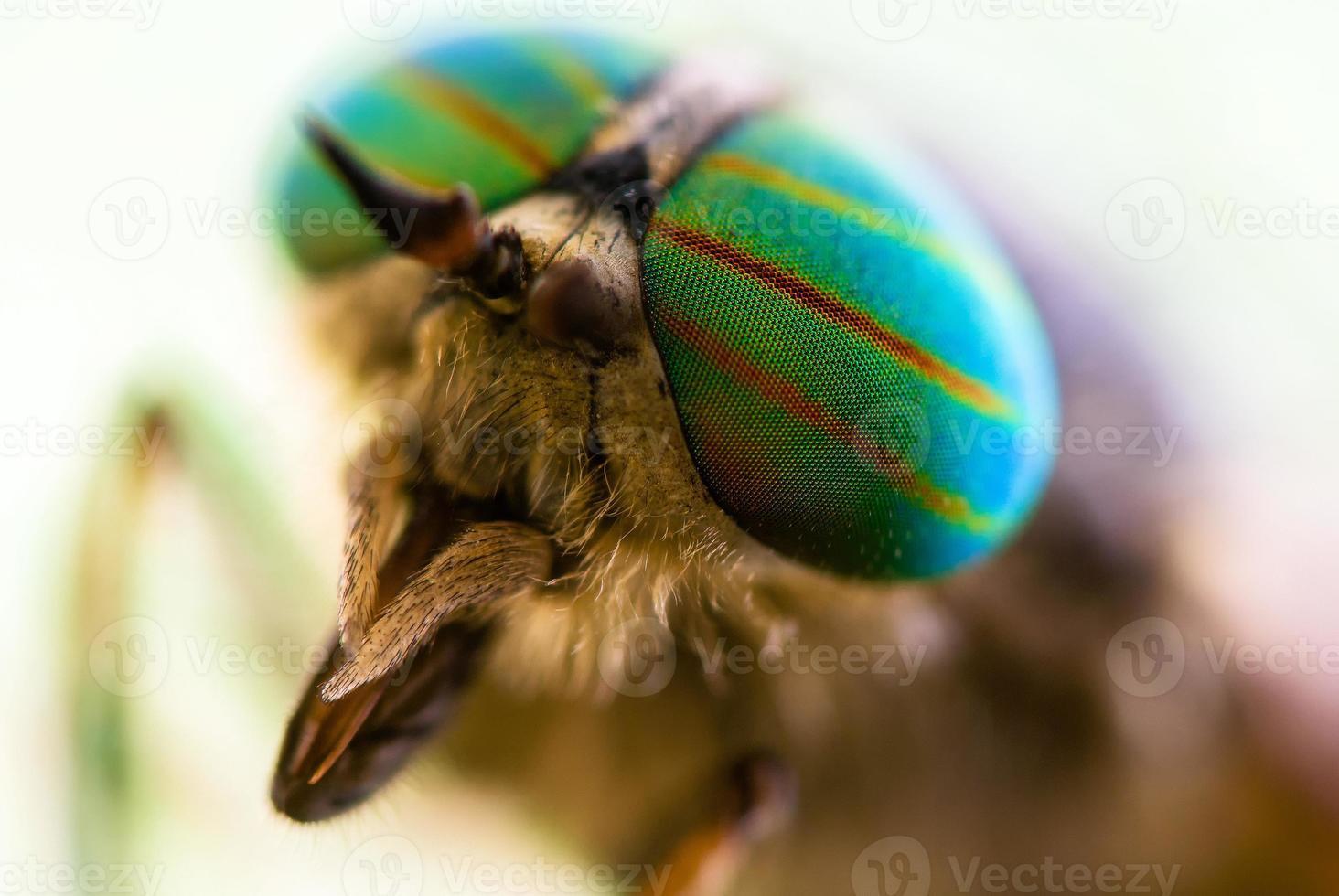 Primer plano de ojo de mosca. foto
