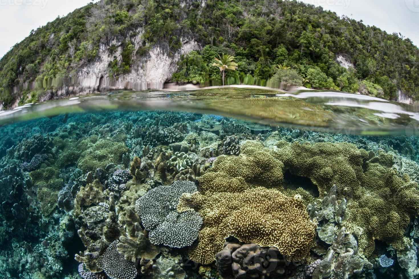 arrecife de coral cerca de la isla de piedra caliza foto