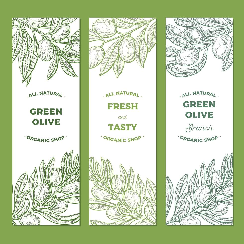 Set of Olive Tree Branch Vintage Banners  vector