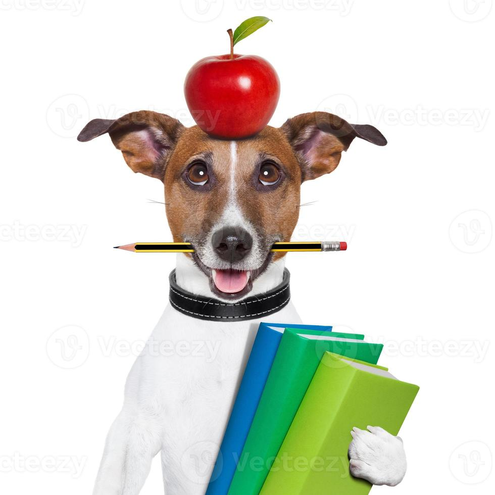 Dog with apple on head and pencil in mouth carrying books photo