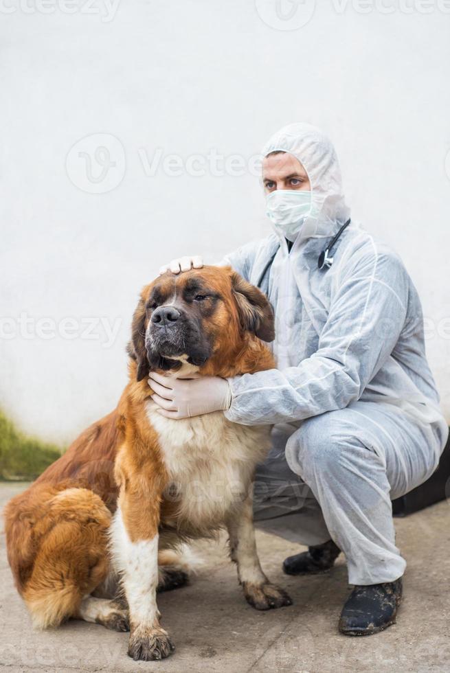 El veterinario inspecciona y controla a un perro. foto