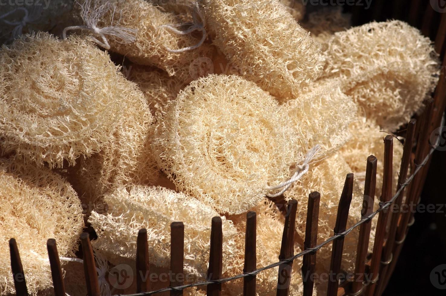 luffa sponges photo