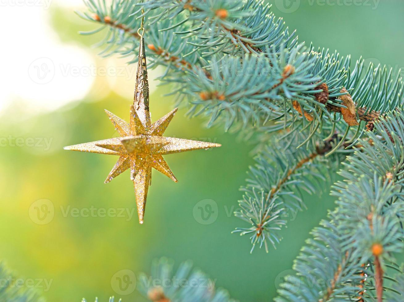 estrella de navidad en pino foto