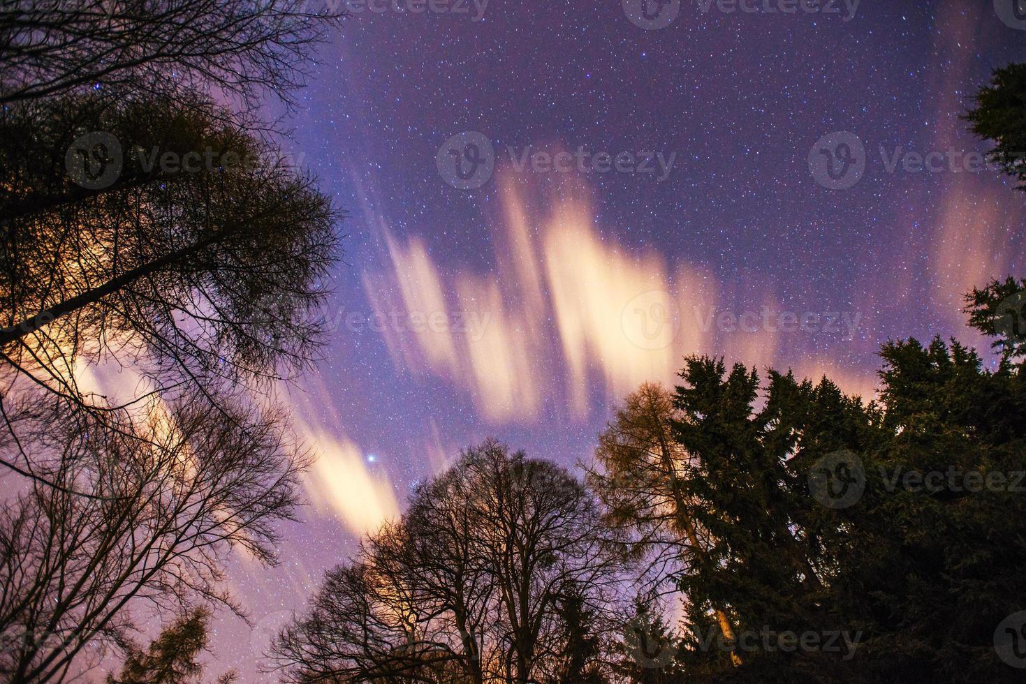 Starry sky through the trees photo