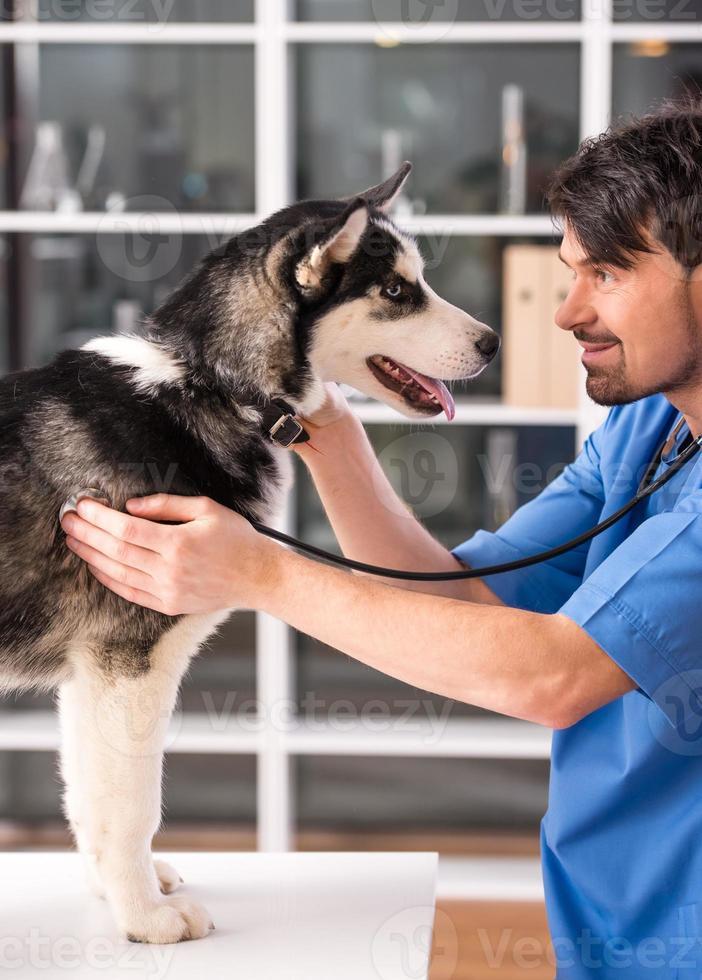 veterinario foto