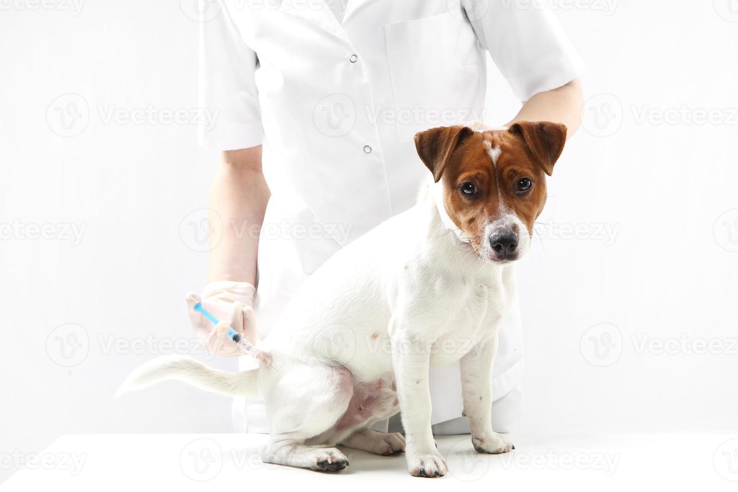 perro en veterinario de vacunación foto