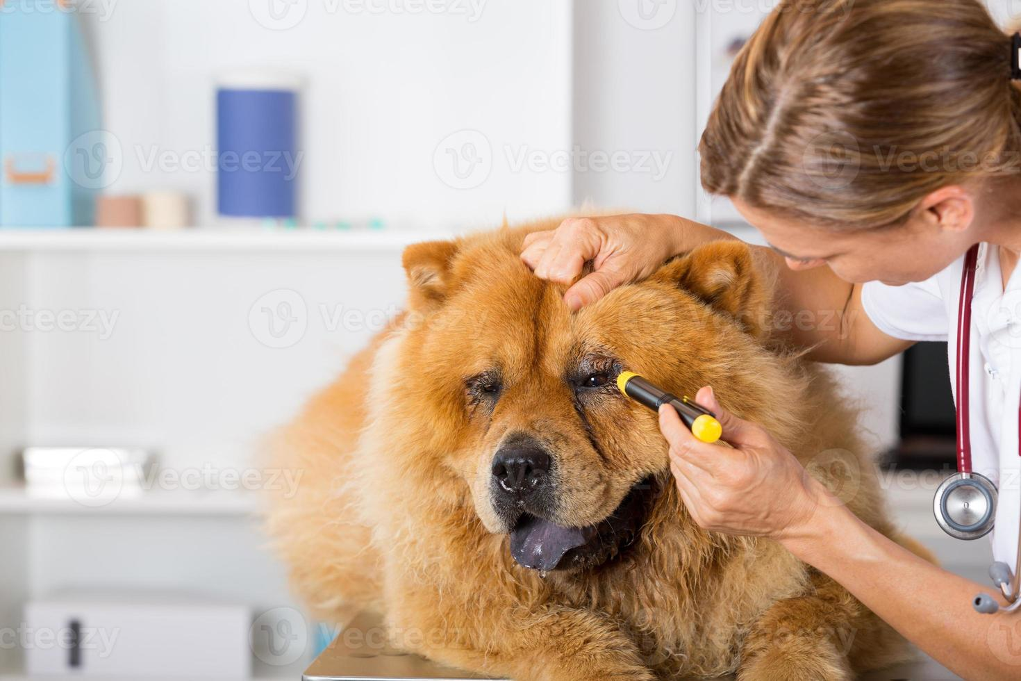 clínica veterinaria foto