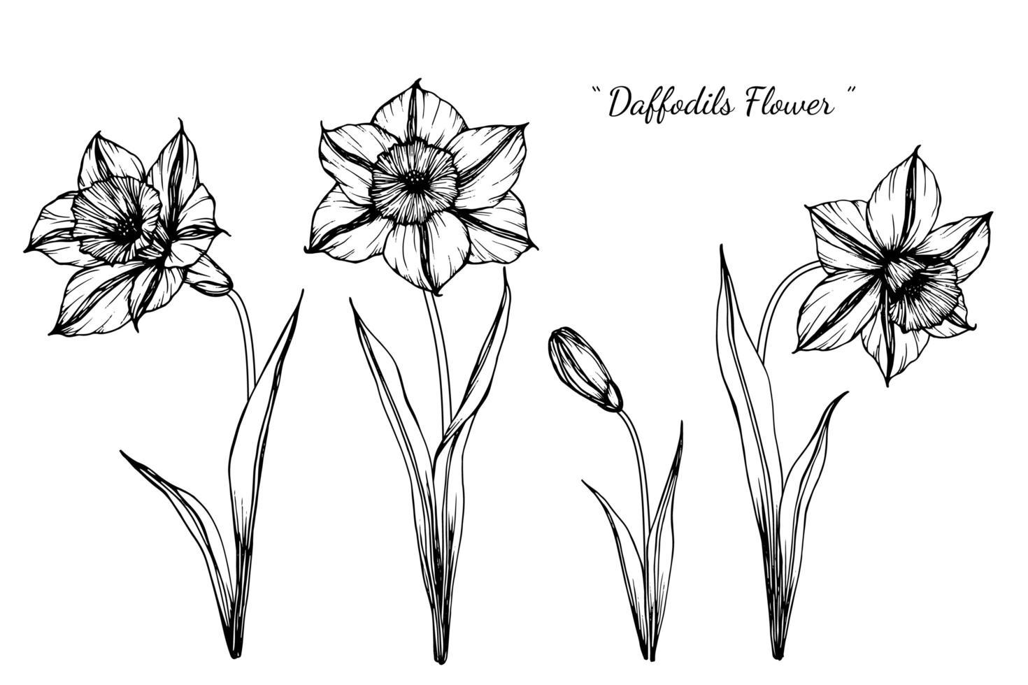 narcisos dibujados a mano diseño de flores y hojas vector