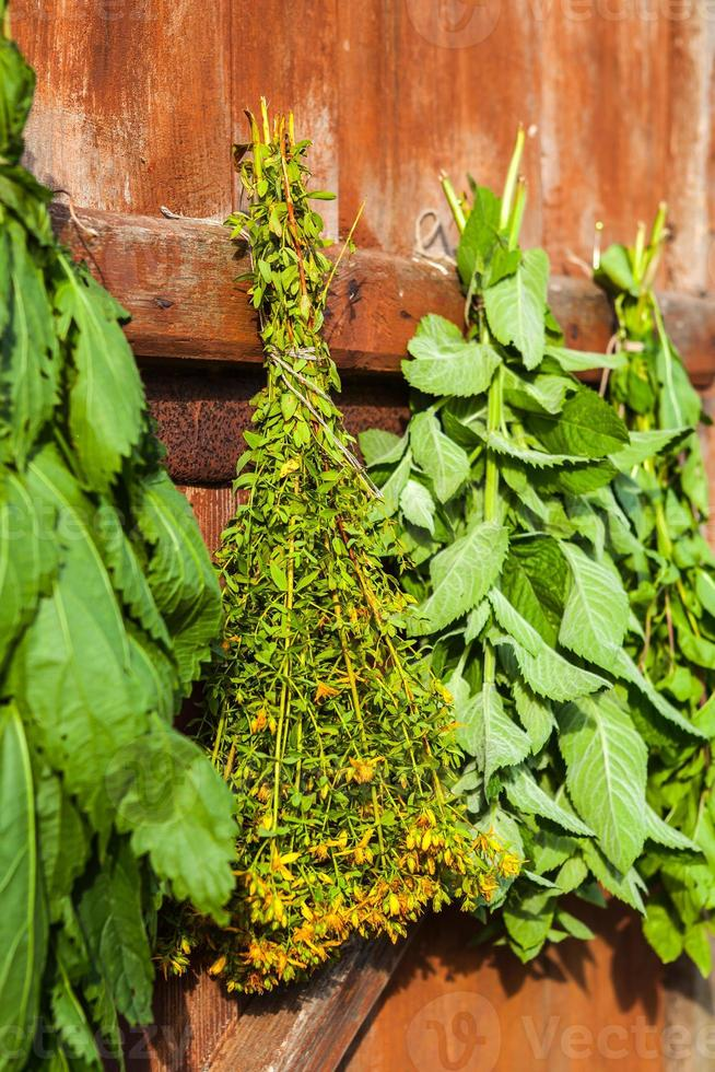 hierbas medicinales foto