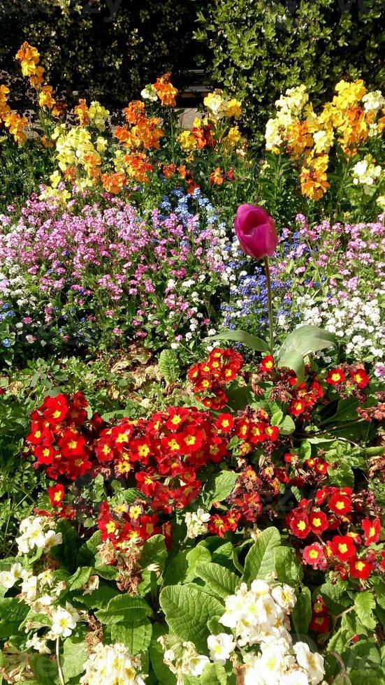 cama de tulipanes y flores foto