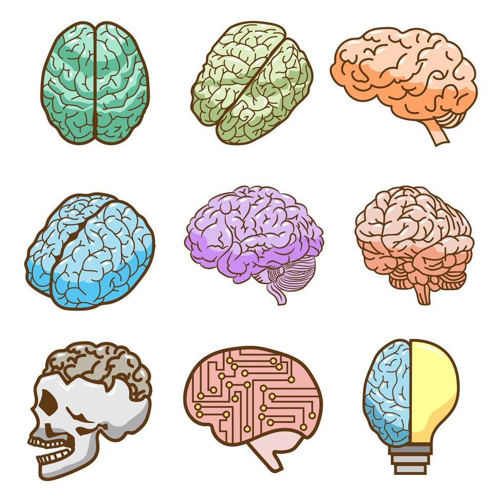 ensemble de cerveau coloré vecteur