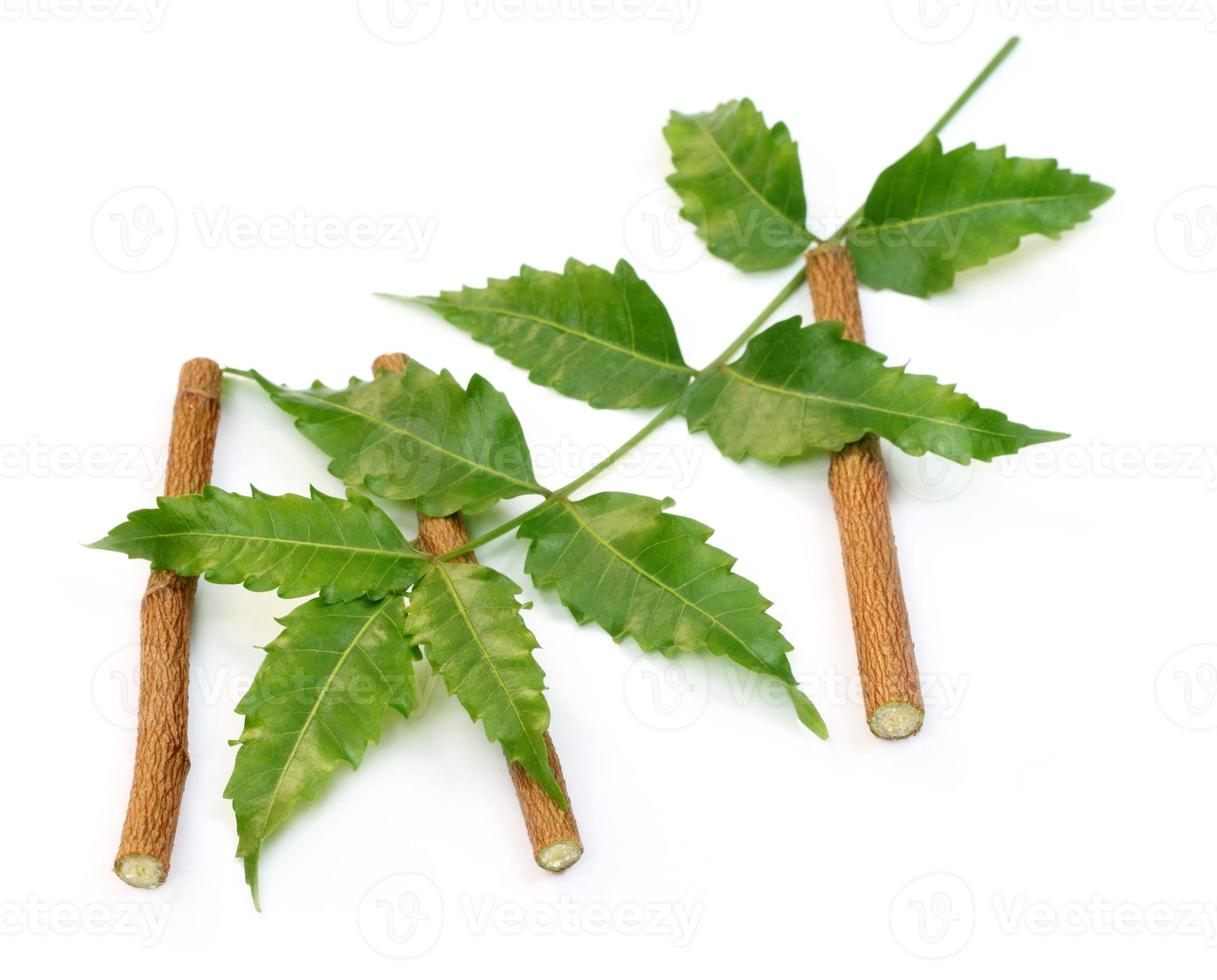 Medicinal neem leaves with twigs photo
