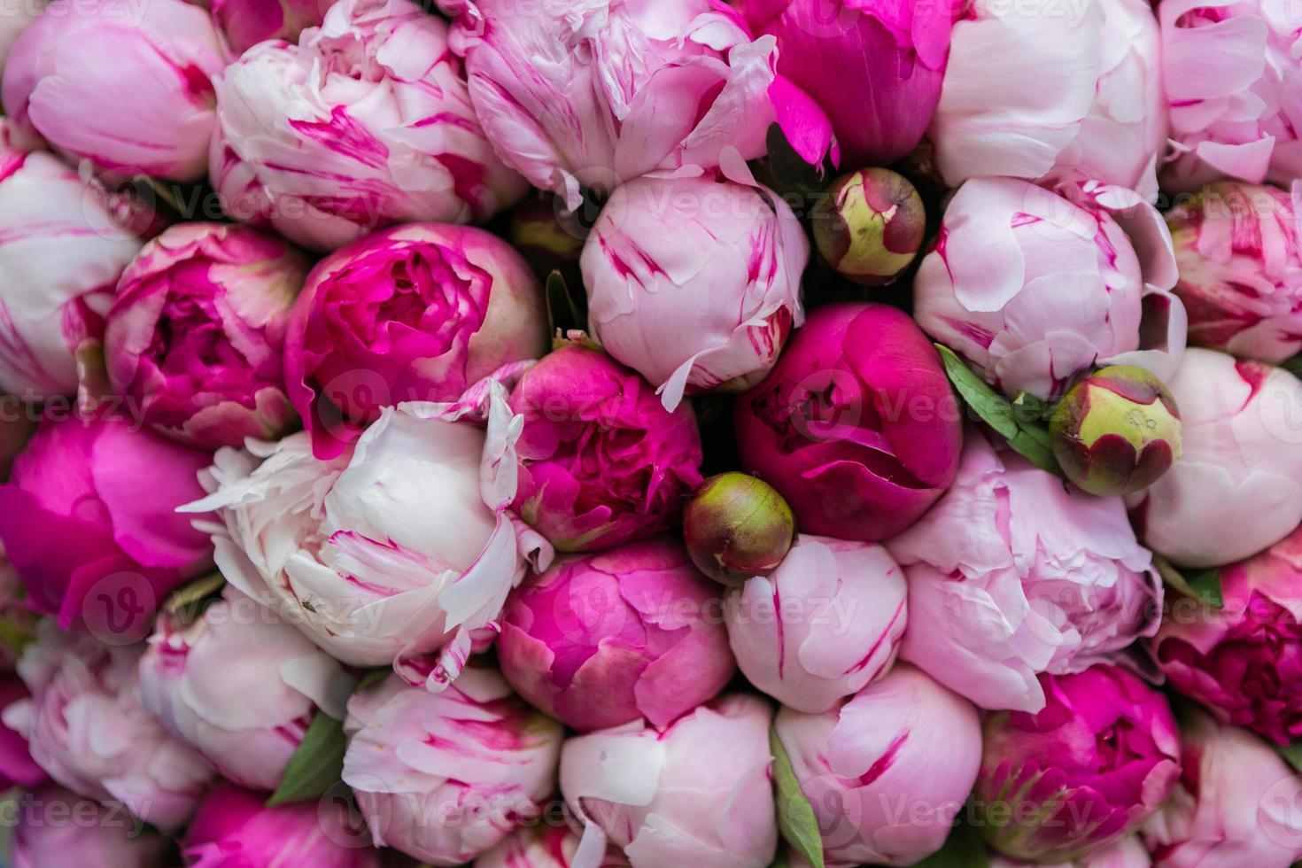 Ramo de peonía rosa. patrón floral. foto