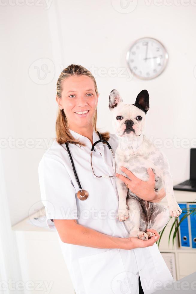 alegre joven rubia veterinaria cuidando perro bulldog francés foto