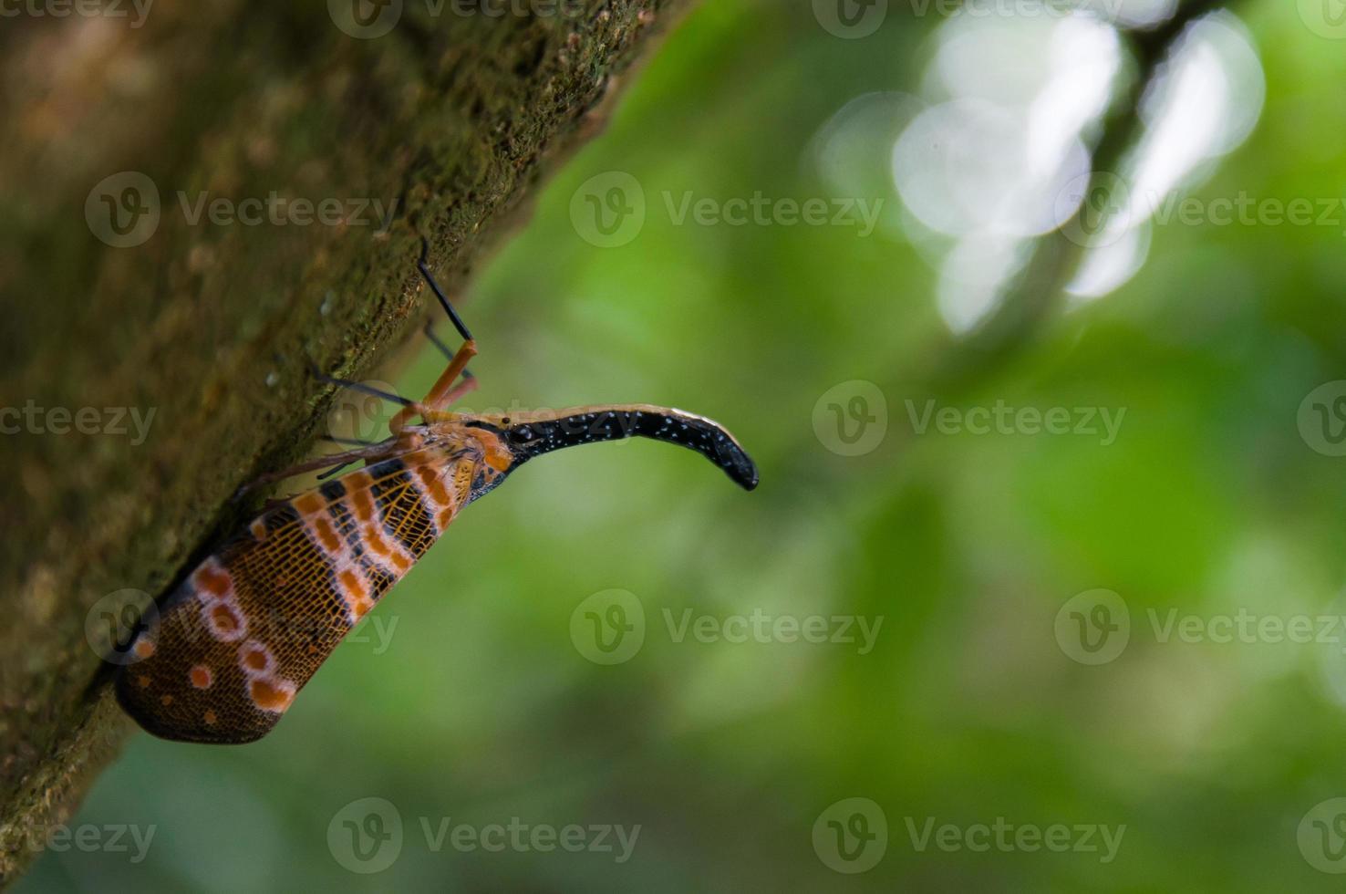 pequeño insecto en la selva foto