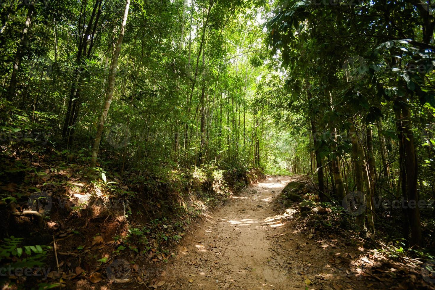 Jungle trekking on Koh Phangan photo