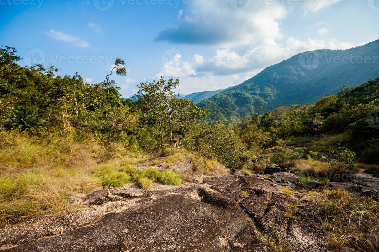 caminata por la jungla en koh phangan foto