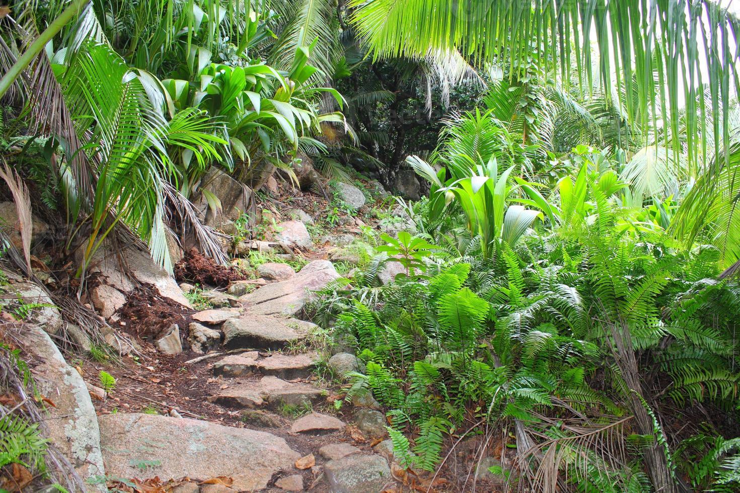 Jungle, rainforest photo