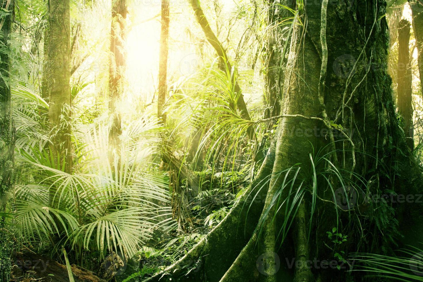 Tropical jungle photo