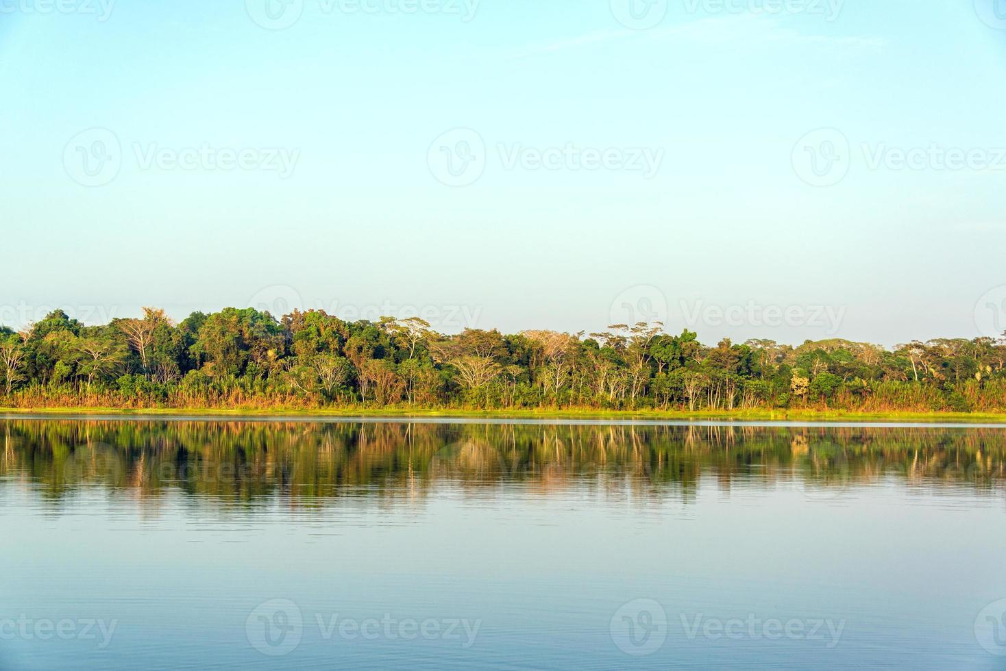 reflejo del lago y la jungla foto