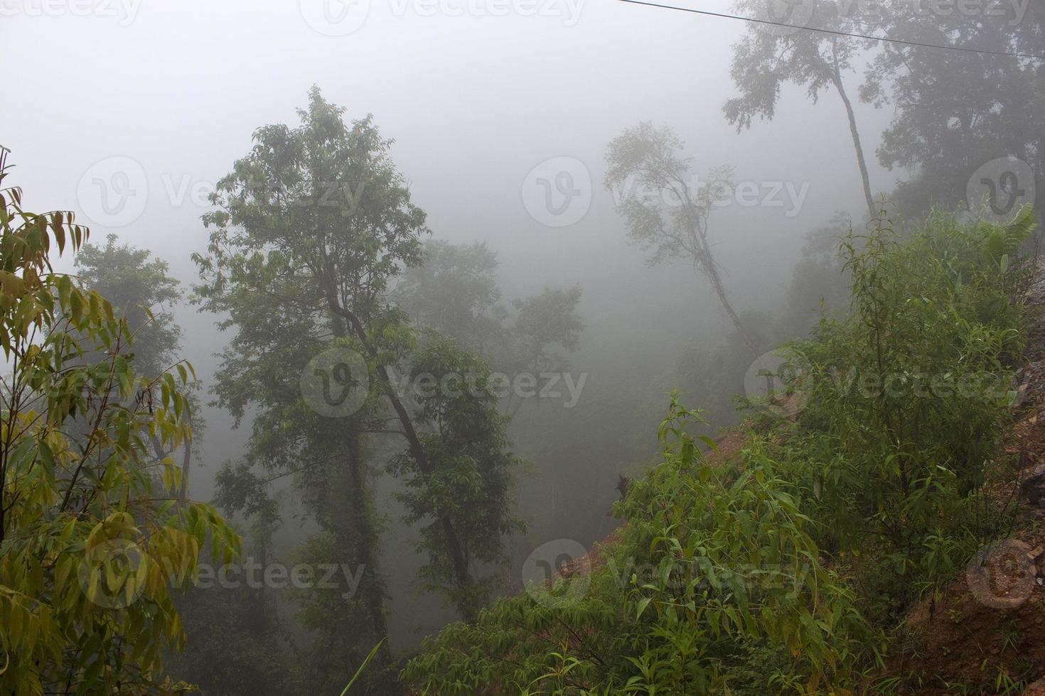selva en la niebla de la mañana foto