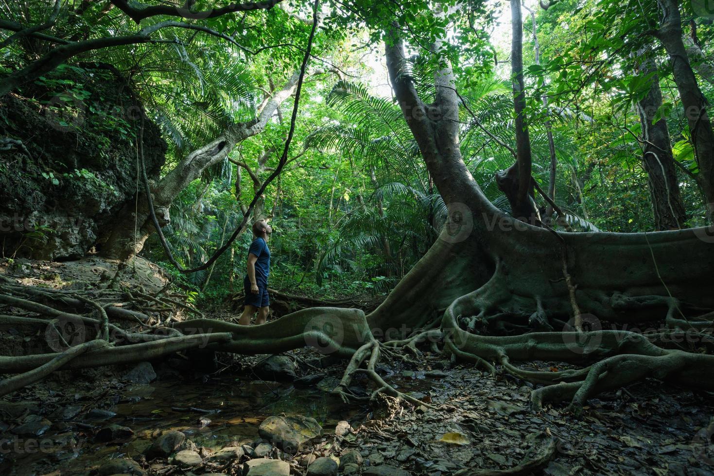 Hombre explorando la selva tropical con enorme árbol viejo foto