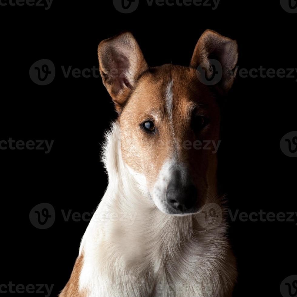 Retrato de un suave collie en la oscuridad foto