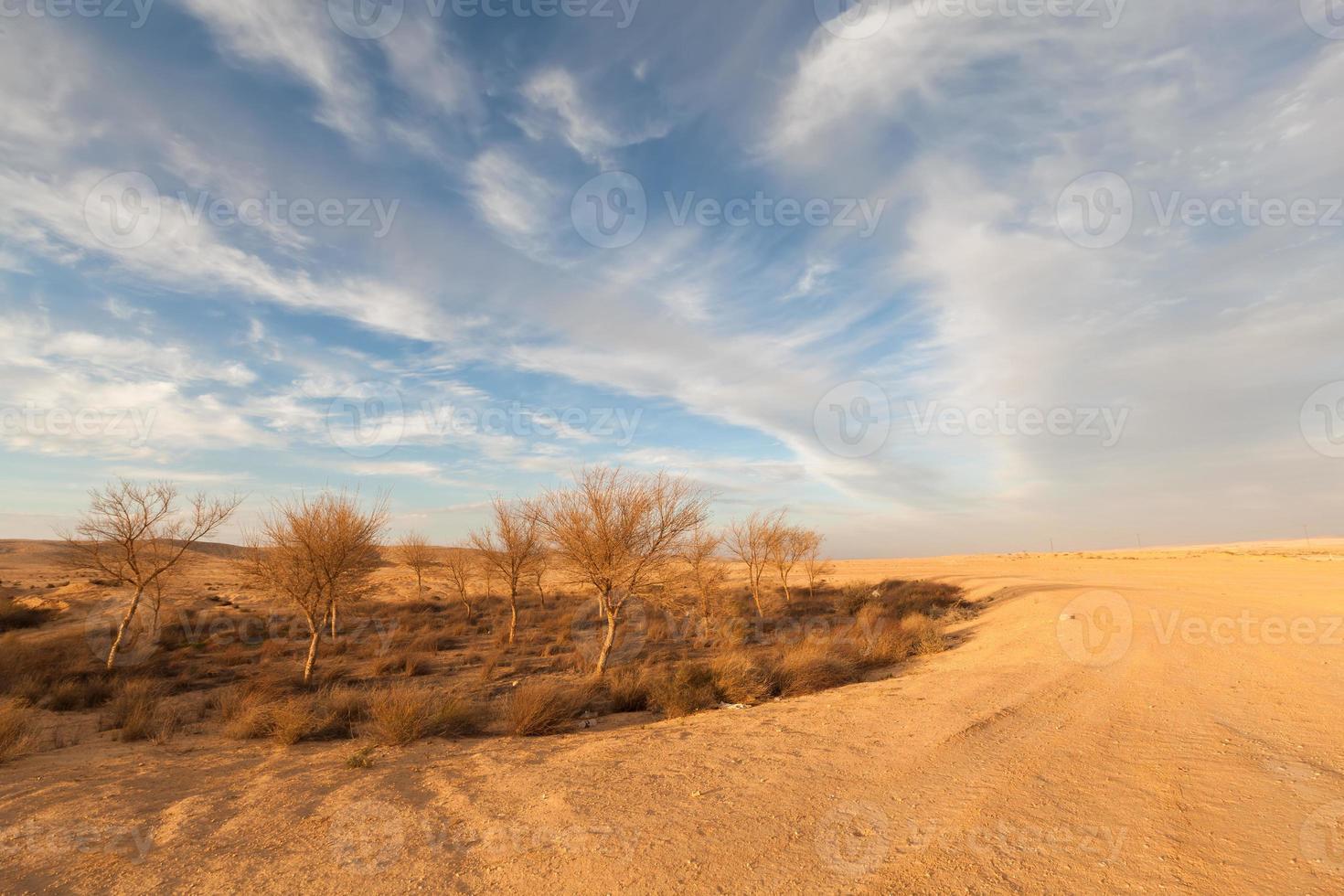 desierto amarillo foto
