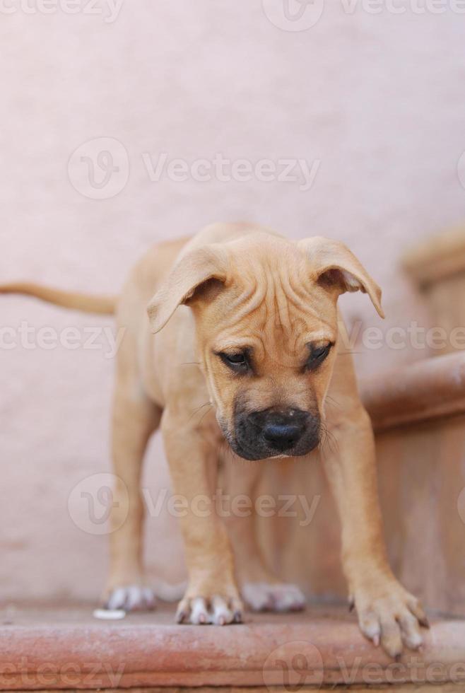 junger hund auf treppe foto
