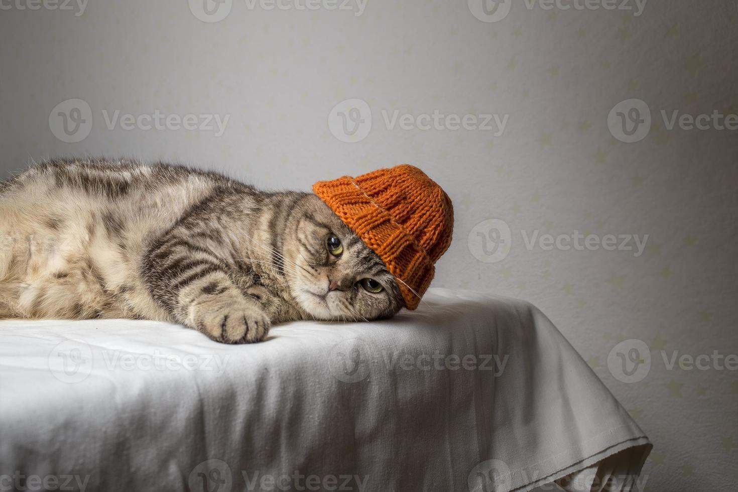 gato pliegue escocés gris con un divertido sombrero de invierno naranja foto