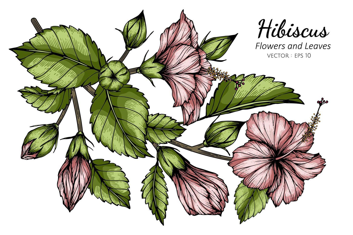 flor de hibisco rosa y hojas vector