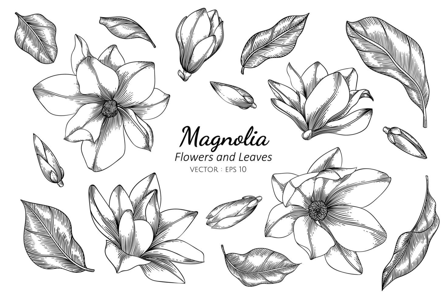 magnolia bloemen en bladeren vector